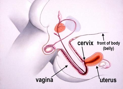 gravid sexställning analsex